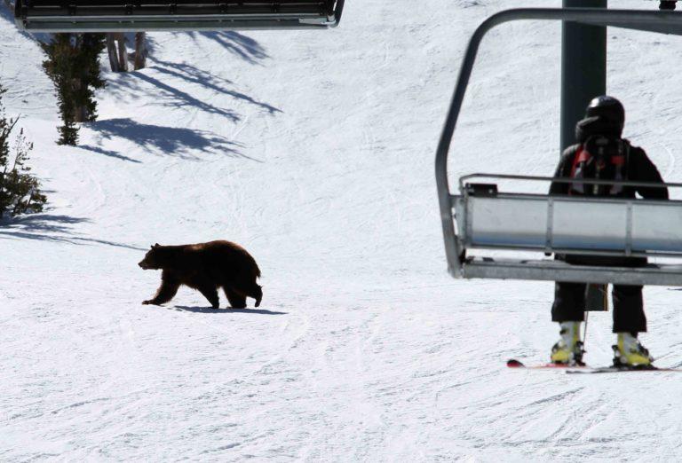 Bear Steering